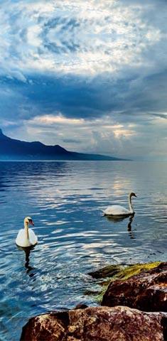 自然奢华新欧洲