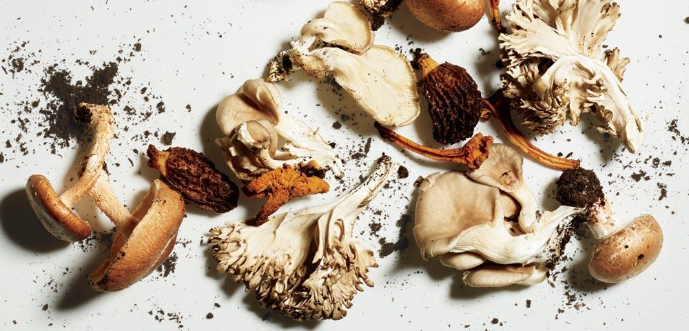 蘑菇系健康魔法