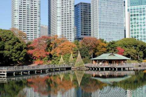 浜离宮恩赐庭园——体验传统日本庭院文化